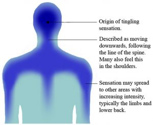 FIgure of a human that describes the effect of ASMR upon experiencing ASMR tingles
