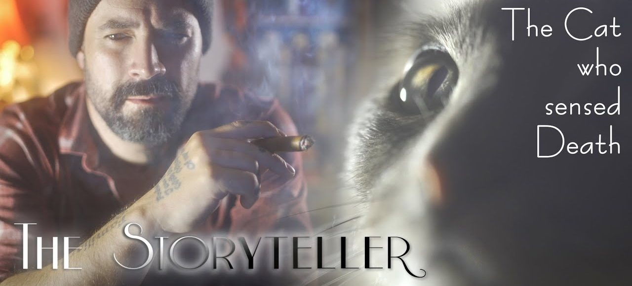 The ASMR Storyteller – The Cat Who Could Sense Death